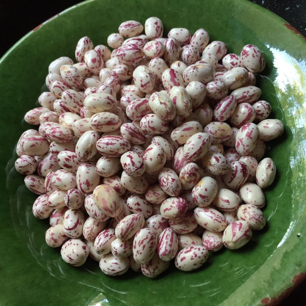 Borlotti haricots